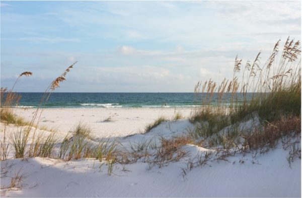 The Gulf of Mexico shore line with sea oats framing the scene.